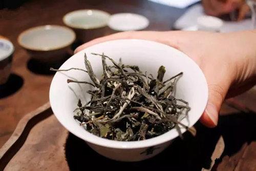 2021年麻黑普洱茶多少钱一斤